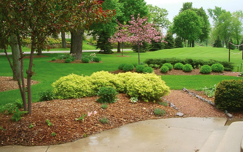 designed landscape with mulch bed